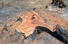 Khẩn trương điều tra vụ phá rừng quy mô lớn tại huyện Đắk G'Long