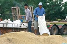 Thái Lan khuyến cáo nông dân không tăng sản lượng lúa gạo