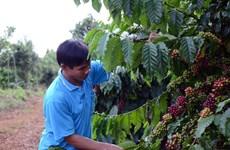 Làm gì để nâng cao giá trị nông sản Việt Nam sau thu hoạch