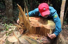 Đình chỉ công tác 6 kiểm lâm để xảy ra phá rừng ở Quảng Nam