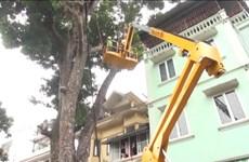Hà Nội nghiên cứu ứng dụng công nghệ trong việc cắt, tỉa cành cây