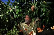 Cơ hội kinh doanh và đầu tư với Mexico trong lĩnh vực nông nghiệp