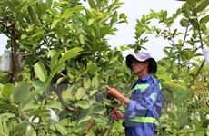 TP.HCM: Biến bãi rác ô nhiễm thành vườn cây công nghệ cao