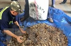 Hải quan TP.HCM tiếp tục thu giữ 3,3 tấn vảy tê tê nhập khẩu trái phép