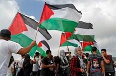 Liên hoan phim Cannes 2018: Palestine được tham gia chính thức