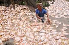 Đồng Nai: Hơn 1.500 tấn cá bè chết trên sông La Ngà do thiên tai