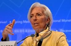 IMF: Các chính sách thương mại của ông Trump làm tổn hại nền kinh tế