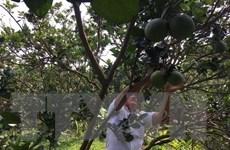 Bến Tre đầu tư 35 tỷ đồng phát triển các sản phẩm nông nghiệp thế mạnh
