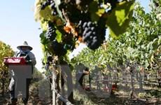 Mỹ kiên quyết theo đuổi đàm phán về nông nghiệp với EU
