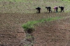 Hội Chữ Thập đỏ quốc tế cảnh báo khủng hoảng lương thực ở Triều Tiên