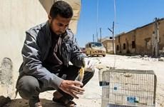 Công ty quân sự Anh phủ nhận dàn dựng vụ tấn công hóa học ở Syria