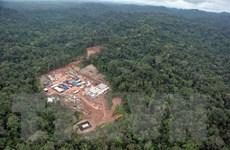 """Biến đổi khí hậu: Amazon - """"Lá phổi"""" đang bốc cháy của hành tinh"""