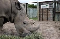 Báo động đỏ về tình trạng giết hại động vật hoang dã trên thế giới