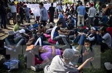 Mỹ bắt giữ hơn 40 người di cư Trung Mỹ tại biên giới Mexico