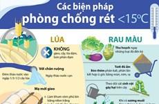 [Infographics] Các biện pháp phòng chống rét cho lúa và rau màu