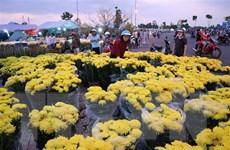 Đà Lạt có khoảng 1.500 ha hoa phục vụ thị trường Tết Kỷ Hợi 2019