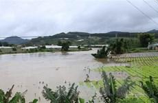 Lâm Đồng: Vựa rau Tết tan hoang sau khi thủy điện Đa Nhim xả lũ