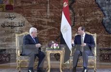 Tổng thống Ai Cập khẳng định sự ủng hộ dành cho Palestine