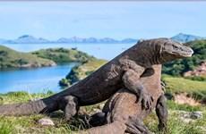 Vườn quốc gia Đông Nusa Tenggara Indonesia có gần 2900 rồng Komodo