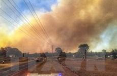 Nắng nóng kỷ lục khiến cháy rừng diễn biến phức tạp tại Australia