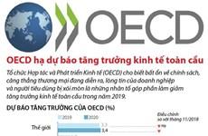OECD dự báo tăng trưởng kinh tế toàn cầu giảm trong năm nay