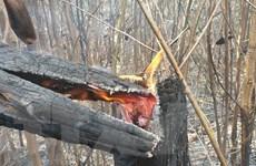 Bắc Giang sẽ xử lý nghiêm chủ rừng thiếu trách nhiệm để cháy rừng