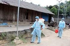 Tỉnh Lai Châu đã xuất hiện ổ dịch tả lợn châu Phi đầu tiên