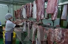 Các địa phương khuyến cáo người dân không 'quay lưng' với thịt lợn