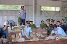 Mở rộng điều tra vụ án vận chuyển trái phép ngà voi vào Việt Nam