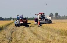 Nam Bộ sẽ chuyển đổi trên 126.000ha đất lúa kém hiệu quả