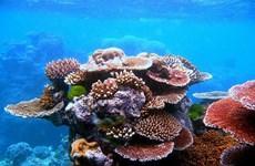 Great Barrier Reef thu về 3,5 tỷ AUD mỗi năm cho du lịch Australia