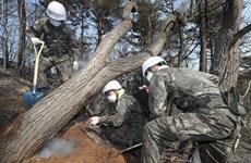 Hàn Quốc chia sẻ với Triều Tiên về tình hình cháy rừng tại Goseong