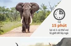 Nhiều động vật hoang dã trên thế giới đang rơi vào cảnh tuyệt chủng