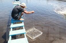 Ứng dụng công nghệ Biofloc vào nuôi tôm thu lãi hơn 1 tỷ đồng mỗi ha