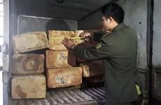 Công an huyện Sa Pa khởi tố 5 đối tượng tấn công kiểm lâm