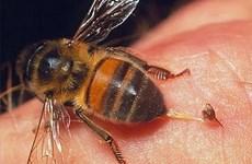 Nghệ An: Một người đàn ông tử vong vì ong đốt khi đi rừng
