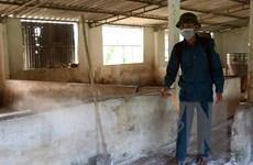 Tăng chăn nuôi gia cầm, gia súc khác để cân đối nguồn cung thịt lợn