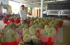 Đa dạng trái cây đặc sản Việt hội tụ tại thị trường TP.HCM