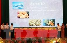 Mộc Châu phấn đấu xuất khẩu khoảng 500 tấn xoài sang Trung Quốc