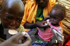 Gần 50% số ca tử vong trẻ em tại châu Phi bắt nguồn từ thiếu đói