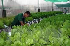 Trang trại Trường Phúc trồng rau thủy canh xuất khẩu sang Hàn Quốc