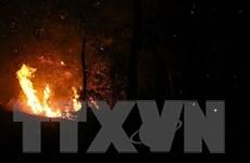 Phú Yên đập tắt đám cháy rừng ở khu vực núi Rọ Hươu