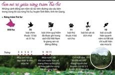 [Infographics] Mùa sen nở đẹp nhất giữa rừng tràm Trà Sư