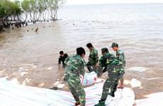 Rà soát lại các tuyến đê bao xung yếu vùng Đồng bằng sông Cửu Long
