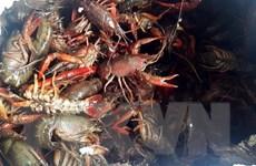 Quản lý sinh vật ngoại lai xâm hại: Tiềm ẩn nhiều nguy cơ lo ngại