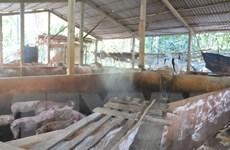 Bến Tre gặp khó trong việc xử lý lợn mắc bệnh dịch tả châu Phi