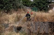 Nắng nóng tại Hy Lạp làm tăng nguy cơ bùng phát cháy rừng