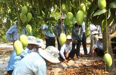 Ứng dụng khoa học công nghệ, tiết kiệm nước cho cây trồng Nam Trung Bộ