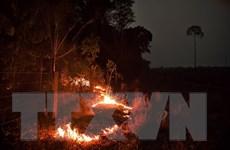 G7: Anh cam kết tài trợ hơn 12 triệu USD khôi phục rừng Amazon