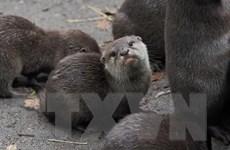 Siết chặt bảo vệ, kiểm soát buôn bán các động vật bên bờ tuyệt chủng